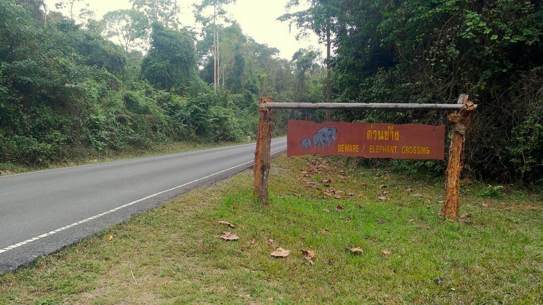 Park Narodowy Khao Yai w Tajlandii