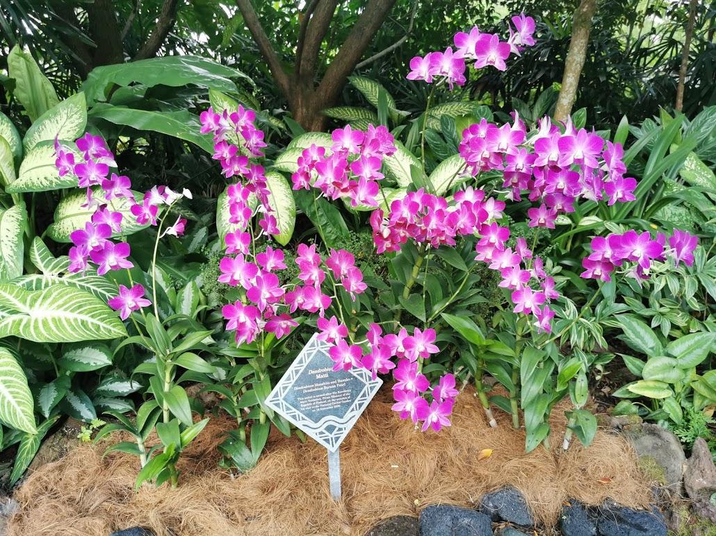 Ogród Orchidei Singapur