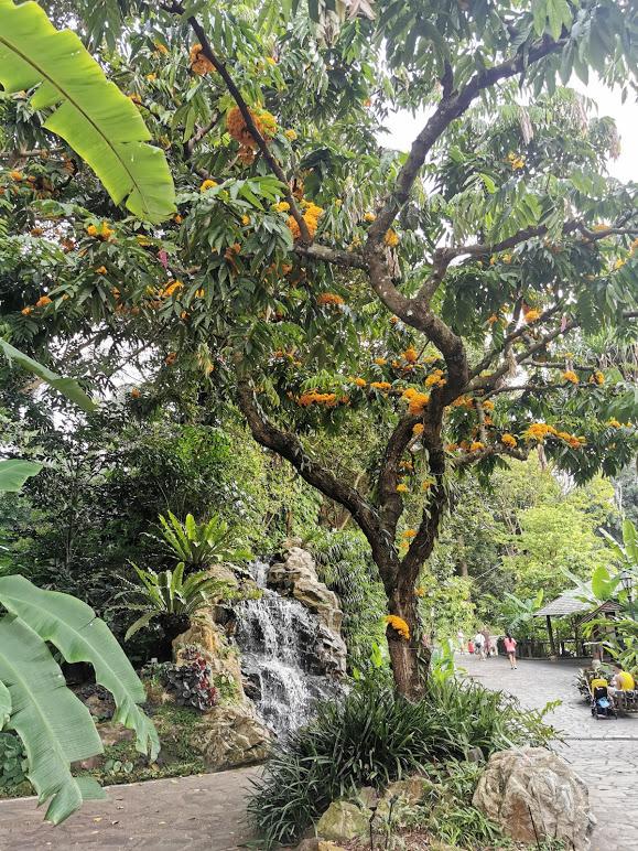 ogród imbirowy botanic gardens