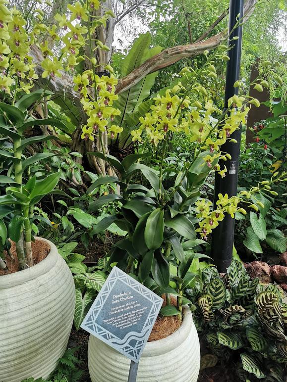 ogród orchidei w singapurze