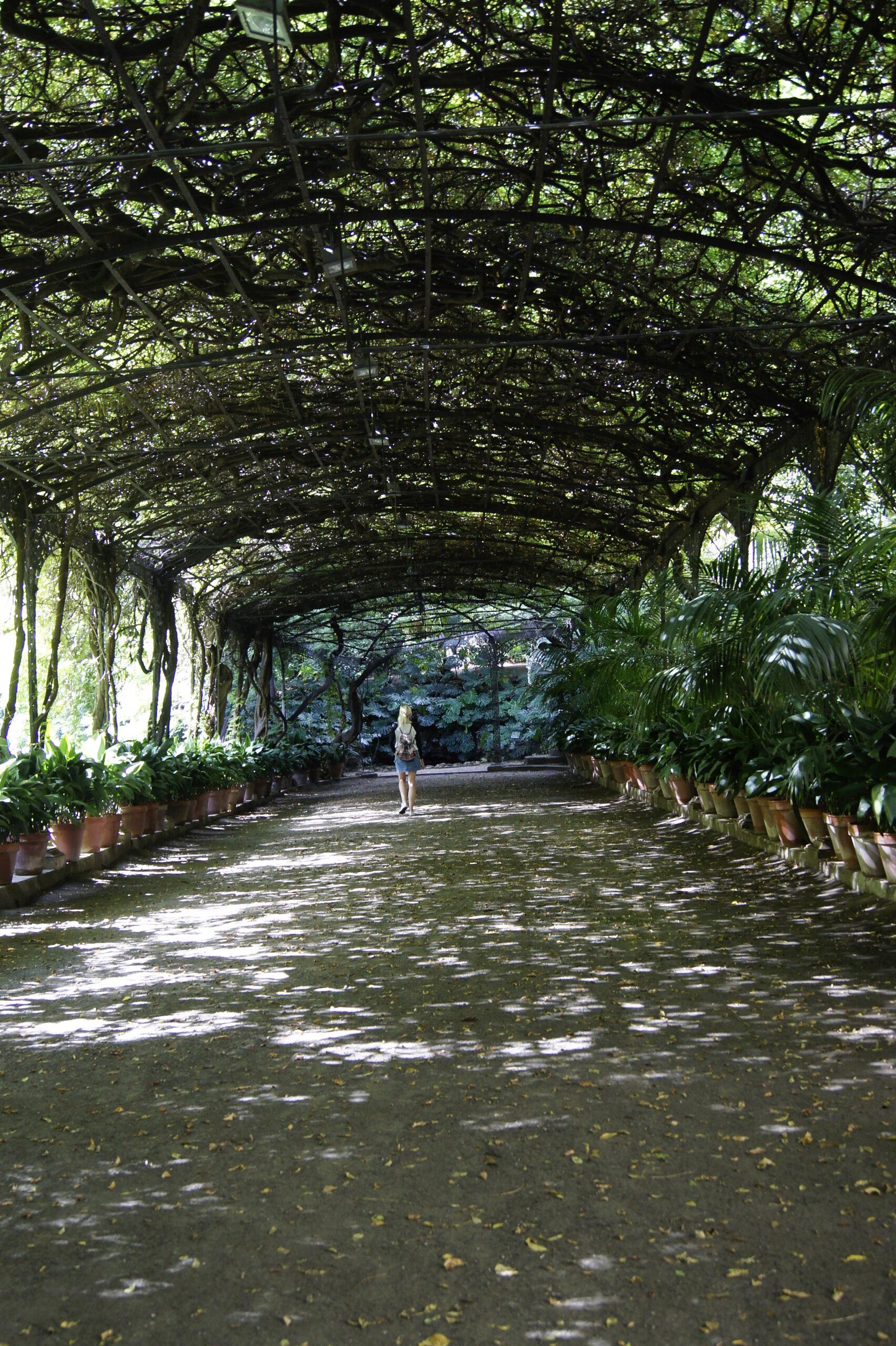 ogród botaniczny Malaga