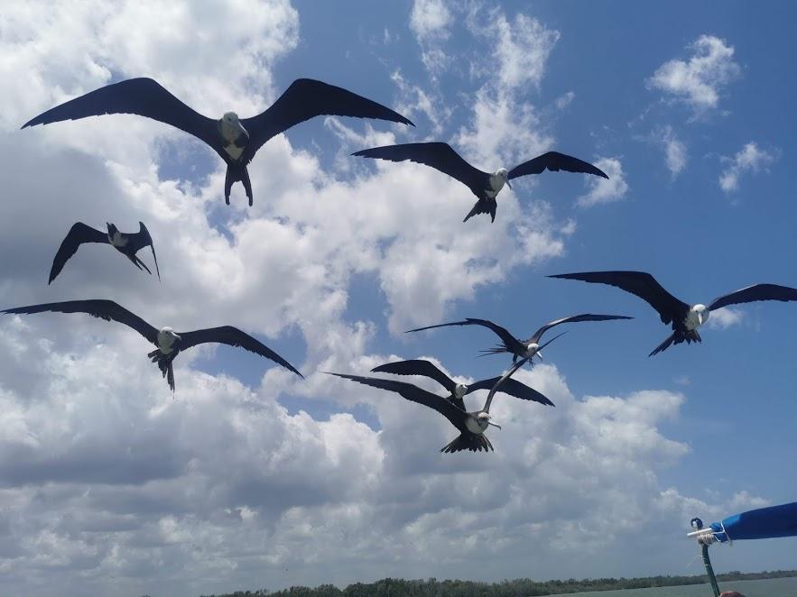 ptaki w Rio Lagartos